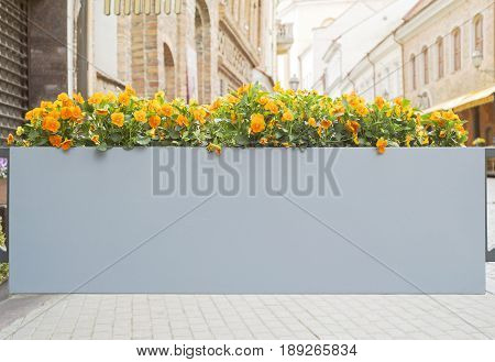 Large flower pot with flowers in sunny oldtown
