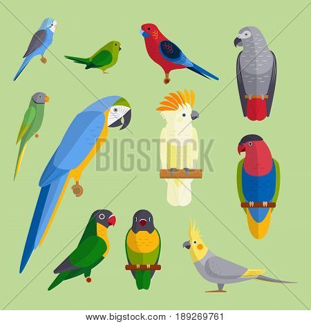 Parrots birds breed species and animal nature tropical parakeets education colorful pet vector illustration. Macaw wild beak wing exotic color avian perch feather avifauna.
