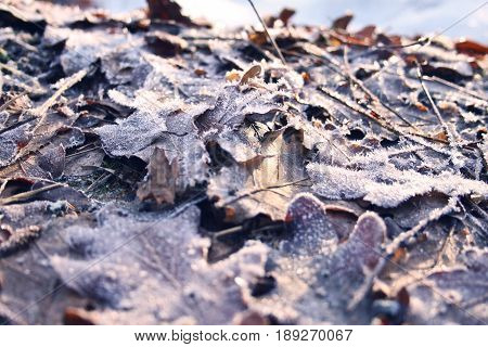 Frozen leaves lying by a frosty lake on the beachside