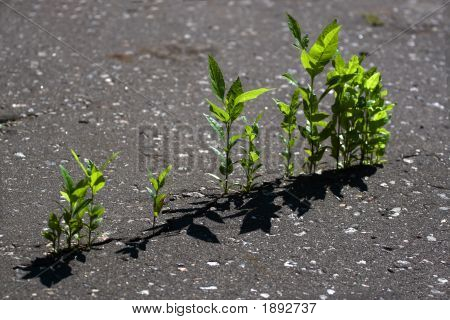 Plants Growing Through The Asphalt
