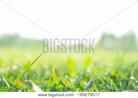 Grass field sunshine field greensward in the park