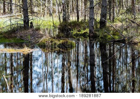Reflections Of Old Trees In Water