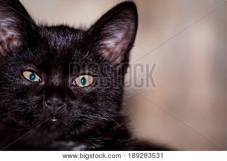 Black Suspicious Cat