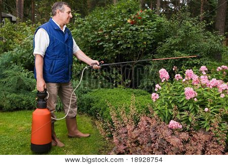 Senior man florist working in the garden