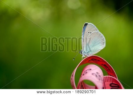 Lose weight diet side view green grass measuring tape pink color figures on it sits blue butterfly close view in blurred background dream lightness flit