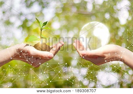 Sprout Growing And Globe In A Hands