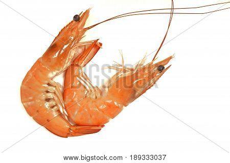 Shrimp Shrimp or Tom Yum Shrimp on a white background.