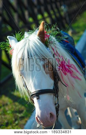 snow-white horse with a braided mane flowers