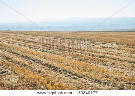 Autumnal stubble field with tractor tracks and hazy hills in the background