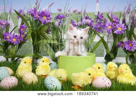 One fluffy white kitten sitting in a green planter bowl up away from fuzzy yellow chicks and easter eggs in green grass white picket fence background with tall purple flowers blue sky behind.