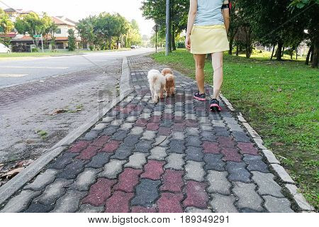 Women Walking Obedient Smart Poodle Dogs Without Needing Leash