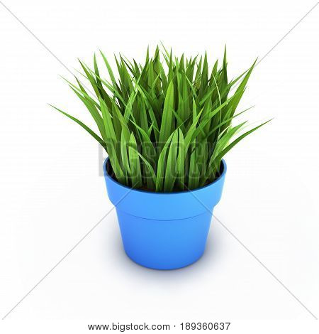 Flowerpot With Green Grass Isolated On White Bakground 3D