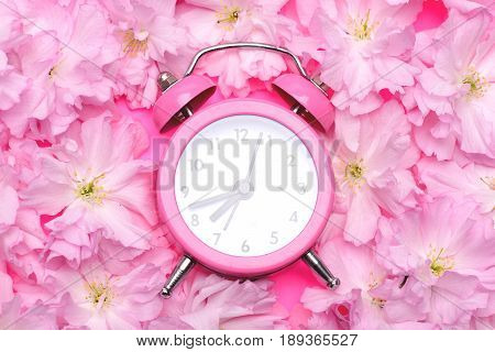Alarm clock in bright pink colour in the middle of blooming pink sakura flowers on bright pink background top view and close up. Perfect spring morning concept