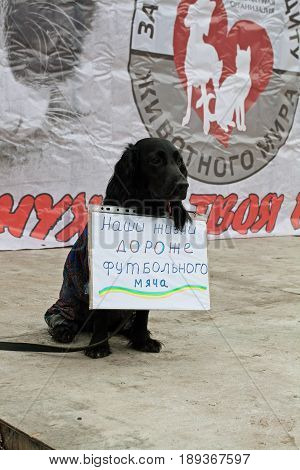 Volgograd Russia - March 31 2012: Dog with table (translated from the Russian