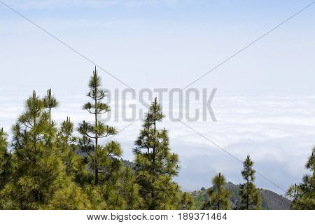 Gran Canaria, Cloud Layer