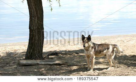 Stray Dog On Beach