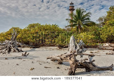 Sanibel Island Lighthouse in morning light showcasing driftwood sand and seashells in foreground.