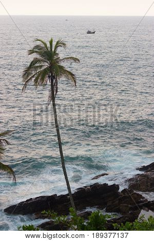 One Palm Tree Against ocean With Copy Space