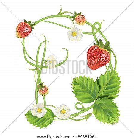 Letter D Strawberry font. Red Berry lettering alphabet. Vector realistic illustration ABC. Design for grocery, farmers market, tea, natural cosmetics, summer garden design element.