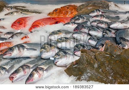 Fish on ice for sale at a fish market