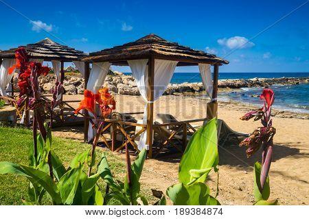 Romantic empty coastline with pergolas and red flowers