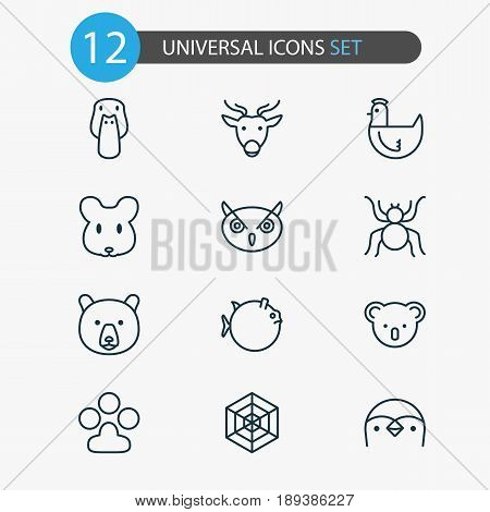 Animal Icons Set. Collection Of Duck, Butterflyfish, Rat And Other Elements. Also Includes Symbols Such As Grizzly, Panda, Koala.