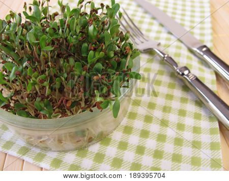 Sprouted alfalfa seeds in glass for raw food