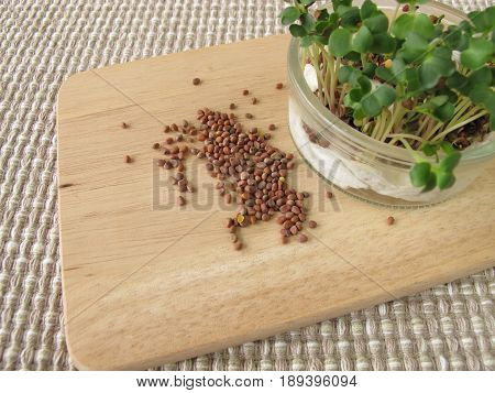 Radishes seeds and sprouts in glass on wooden board