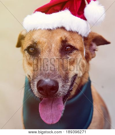 Dog Friend Cute Canine Smiling wearing christmas hat