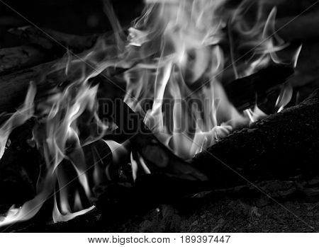 Black And White View On Campfire In Forest
