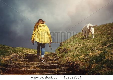 young woman and cute labrador retriever dog puppy go for a walk in autumn during a windy rainy storm