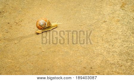 Background the snail leaves a trace of mucus it crawls along the ground