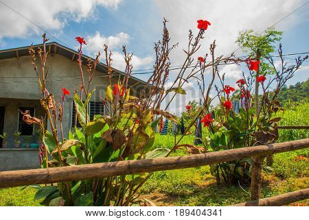 Small House With Red Flowers In The Yard, Philippines.