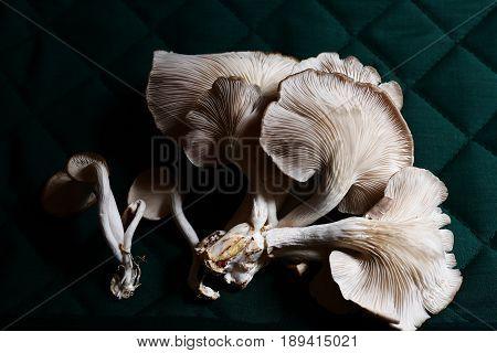 Fresh oyster mushroom in basket .Healthy oyster mushroom.