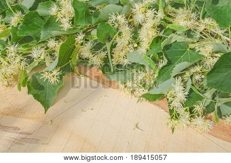 Lime Flowers On A Old Wooden Background