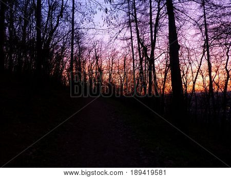 Photo of a colourful sky partially covered by trees
