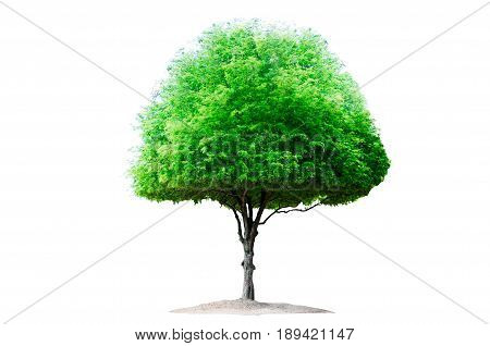 Strong tree still alive on white background
