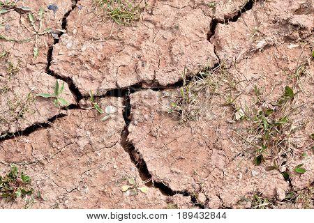 Green shoot grow through Dry cracked yellow land