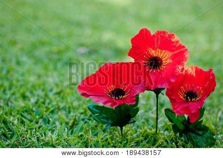 Lest We Forget - Anzac - Rememberance - poppies on grass background