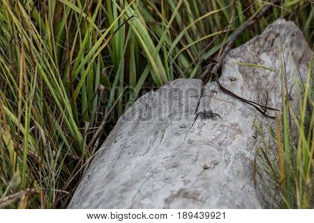 Small Crab on Driftwood Log in coastal marsh