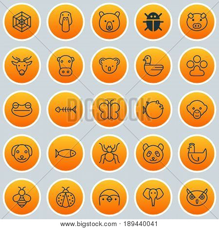Animal Icons Set. Collection Of Baboon, Spider, Kine And Other Elements. Also Includes Symbols Such As Piglet, Frog, Puppy.