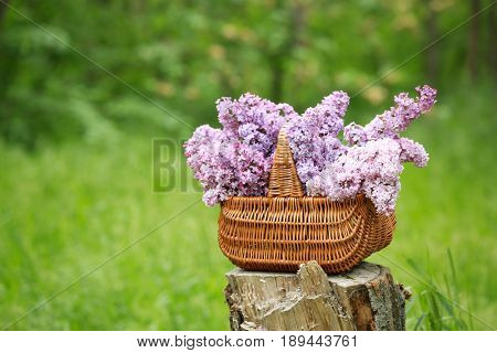 Basket with beautiful lilac bouquet on stub