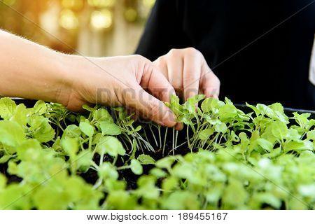 Hand Harvesting Green Plant.