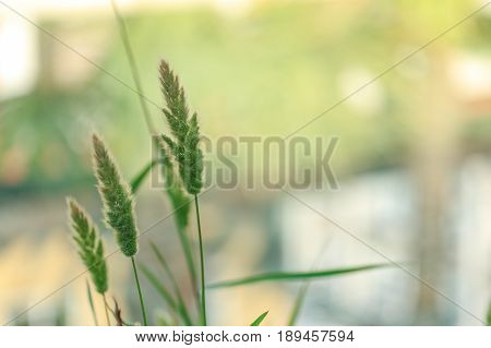 Three long hairy plants with light green background
