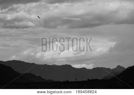 The photo of the landscape looks like a pencil drawing. Pitch Black crows flying over the field.