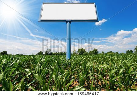 Empty billboard with copy space in a corn field with blue sky and sun rays