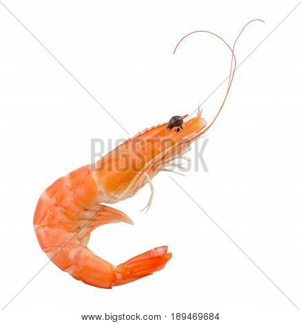 Cuisine and Food Cooked Prawns or Tiger Shrimps Isolated on White Background.