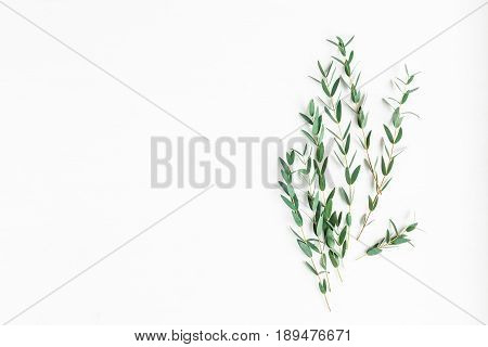 Eucalyptus on white background. Composition made of eucalyptus branches. Flat lay top view