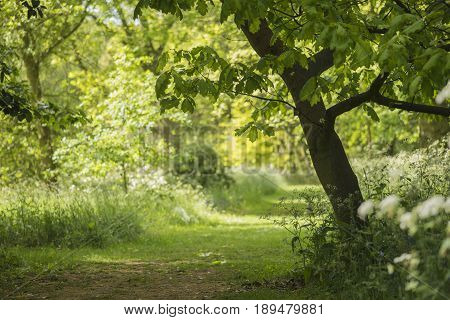 Lovely Shallow Depth Of Field Fresh Landscape Of English Forest And Countryside In Spring Sunshine