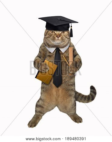 The clever cat is holding a notebook a pencil and a ruler. White background.